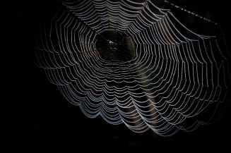 abstract arachnid art black and white